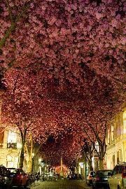 خیابانی در بن٬ آلمان