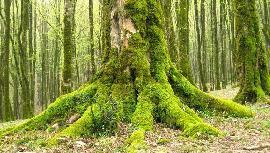 جنگل مازندران