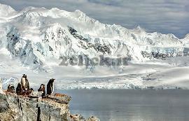 زندگی پنگوئن های قطب شمال
