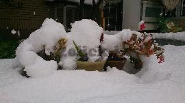 زمستان 92 شیراز