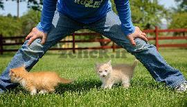 بچه گربه خوشکل
