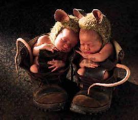 موشهای کوچولو