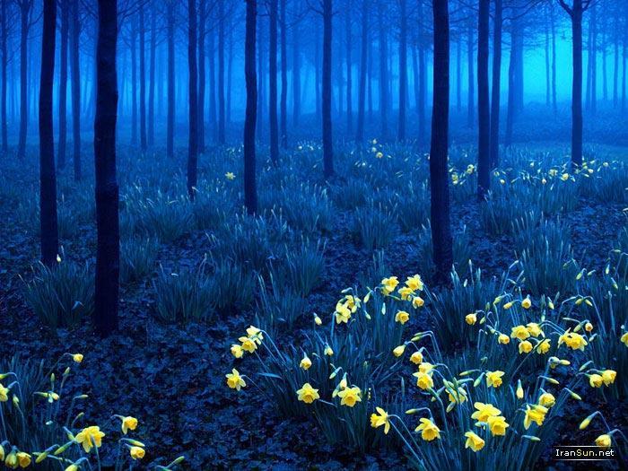 جنگل سیاه٬ آلمان
