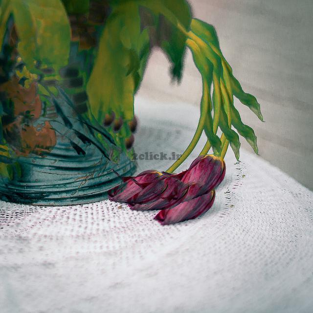 گل پژمرده