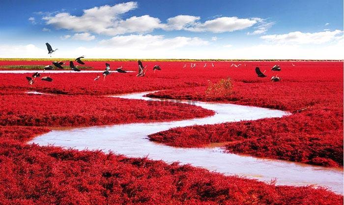 ساحل سرخ٬ چین